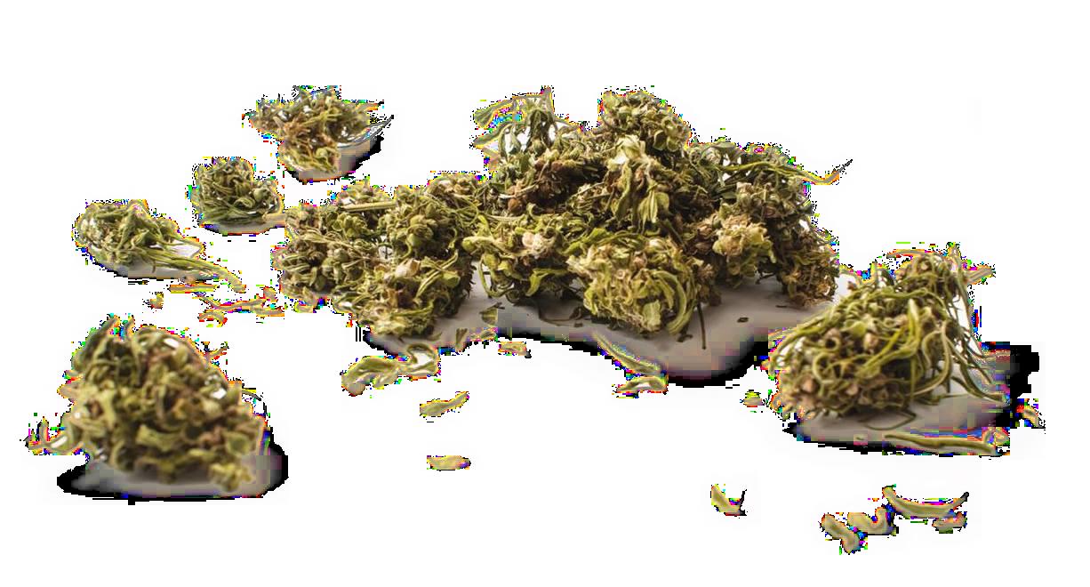 CBD Inflorescenze Cannabis Legal - CBD Infiorescenza di Canapa Legale